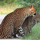 That`s great mom! by jozi1