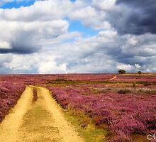 Track from Rudland Rigg. by maureen bracewell