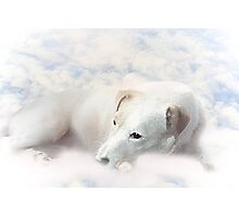 K9 on Cloud 9 Photographic Print