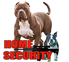 Pit bull Boston terrier security Photographic Print