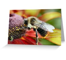Mmmmm! Pollen is good today! Greeting Card