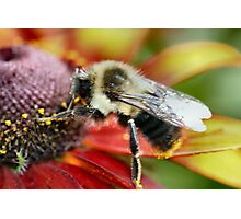 Mmmmm! Pollen is good today! Photographic Print
