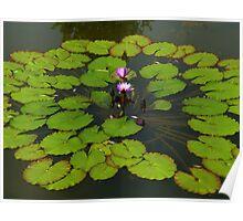 The Water Garden ~  Part Five Poster
