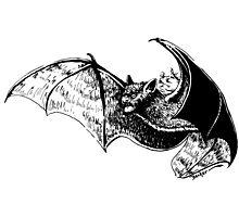 Unleash the Bat! Photographic Print
