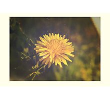 Tiny Yellow Sun Photographic Print