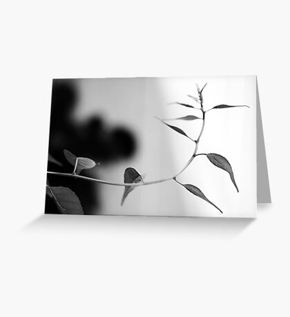 Simplistic and Elegant Black and White Nature Photograph Greeting Card
