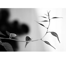 Simplistic and Elegant Black and White Nature Photograph Photographic Print