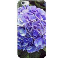 Hydrangeas in Harlem iPhone Case/Skin