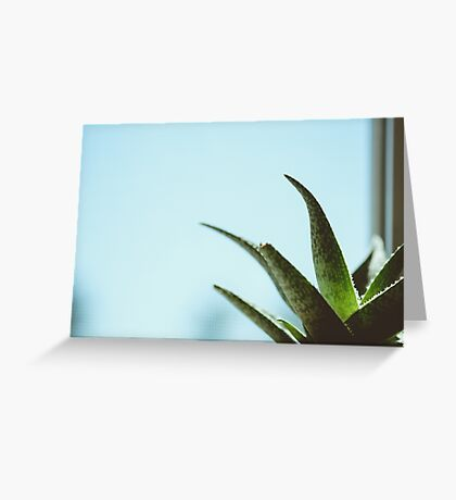 Simplistic Green and Blue Succulent Photograph Greeting Card