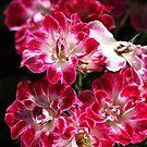 Lush Carpet Roses by Joy Watson