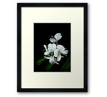 Ginger Lilies at Night Framed Print