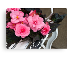 Last Of Summer  -  Begonias On Bench  Canvas Print