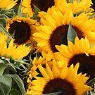 Tuscan Suns by bevmorgan