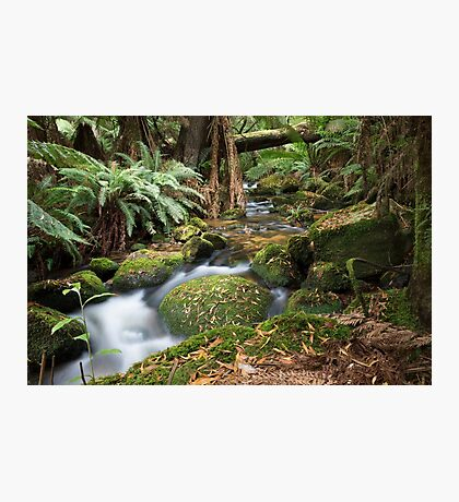 Green Creek Photographic Print