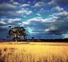 Golden Harvest - Western Districts Victoria - 2013 by bekyimage