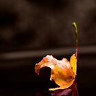 Alone by TB-Photography-