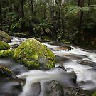 Toorongo Creek by Noeline R