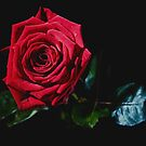 The rose of Tralee by Paul Woods