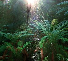 Rainforest Reflection by Tony Waite