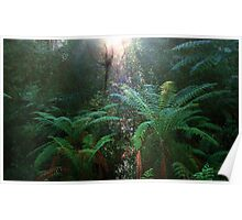 Rainforest Reflection Poster