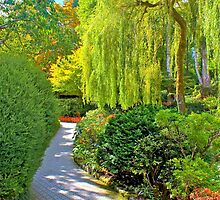 Weeping Willow & Walkway, Buchart Gardens, BC by Thomas Barber