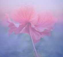 Hibiscus Sky ~ by Emma  Wertheim