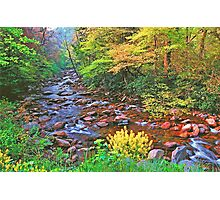 SPRING,W.PRONG LITTLE PIGEON RIVER Photographic Print