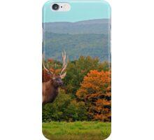 Bull Elk During Rut iPhone Case/Skin
