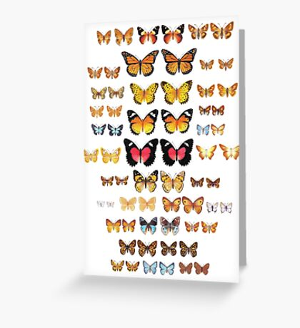 Australian Butterfly Collection Greeting Card