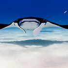 Head On with a Manta Ray by Karen Willshaw
