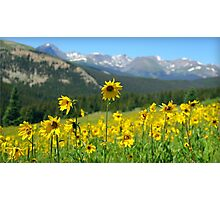 Colorado Wildflowers Photographic Print
