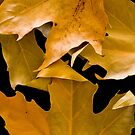 Autum Leaves by Emjay01
