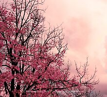 October Blush by Stephanie Rachel Seely