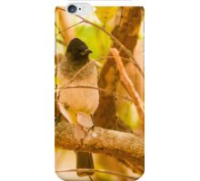 Black Eyed Bulbul iPhone Case/Skin
