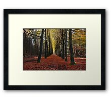 Autumn Trees in a Row Framed Print