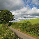 Devon hedgerow by peteton