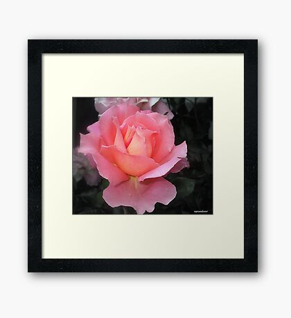 Frills and All! Framed Print
