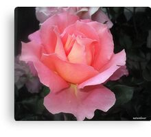 Frills and All! Canvas Print