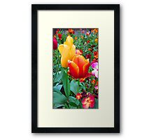 SOLD - TWO TULIPS Framed Print