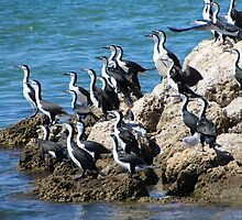 Cormorant Choir by Leanne Davis