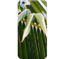 Coco Palm iPhone Case/Skin