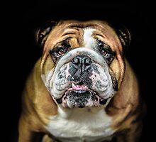bulldog  by ARIANA1985