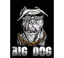 Big dog- Pit bull Photographic Print