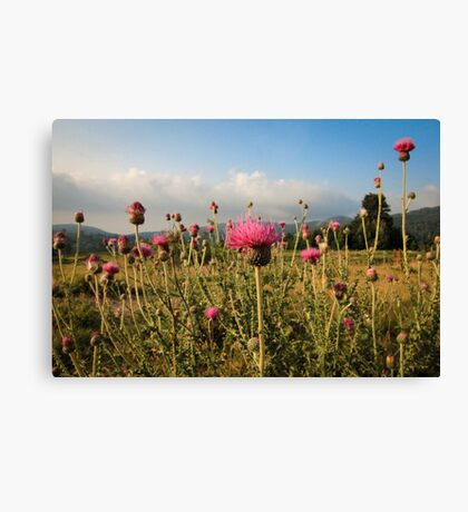 Wildflower Meadow Mountain Countryside Canvas Print