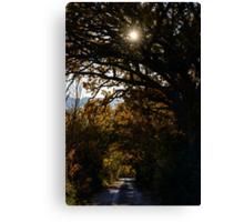 Una strada di campagna, Monticchiello, Toscana, Italia Canvas Print