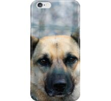 tiny terrier dog iPhone Case/Skin