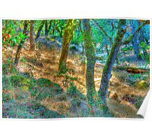 Summer Woods, Santa Rosa, CA Poster