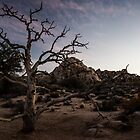 Desert Tree at Dusk - Joshua Tree N. P., CA by Mark Heller