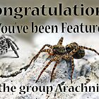 Feature Banner by Tracy Deptuck