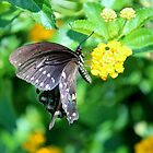 Butterfly Side View by Cynthia48